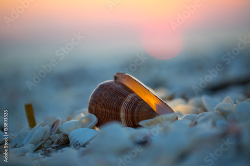 shell at sunset Poster