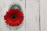 Red flower on white wooden background with copy space