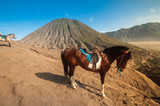 the horse in bromo mountain