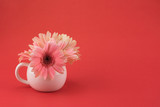 Pink Gebera flower in pastel pink vase on red background with copy space