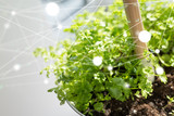 green future solution