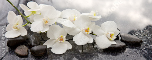Spa stones and white orchid on gray background. - 158870462