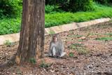 monkey sitting near the tree