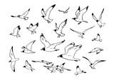 Set of flying seagulls.