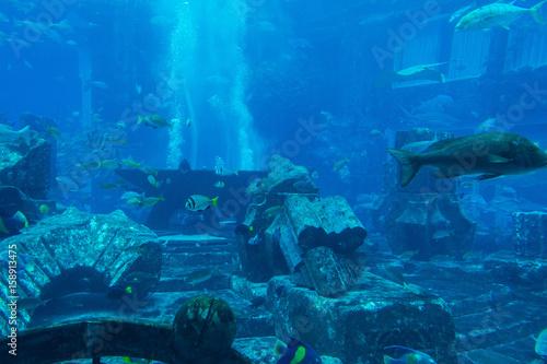 Foto op Plexiglas Dubai Lost chambers aquarium inside Atlantis hotel on Palm Jumeirah, Dubai, UAE United Arab Emirates