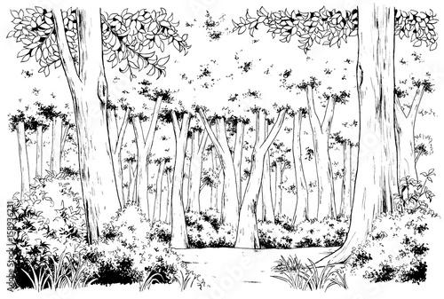 漫画風ペン画イラスト 森 - 158936231