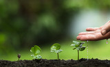 plant a tree,Grow coffee trees, freshness, hands protecting trees, watering, growing, green, - 158942266