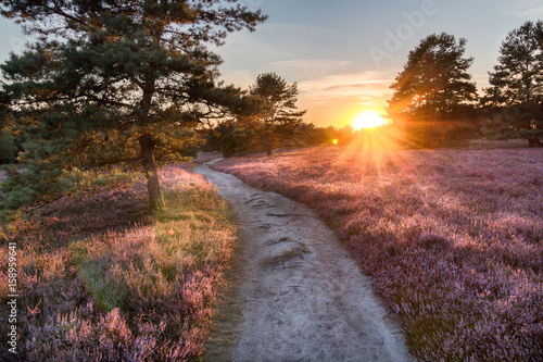 Pustać Lüneburska, zachód słońca
