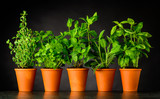 Herb in Pottery Pots on Dark Background - 158972813