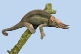Chameleon (Trioceros jacksonii)/Jackson's Chameleon climbing tree branch