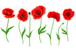 Red Poppy flower isolated on white background, vector illustration, EPS 10.