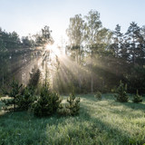 Morning sun beams in the summer forest