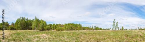 Plexiglas Berkenbos Field with forest edge in summer