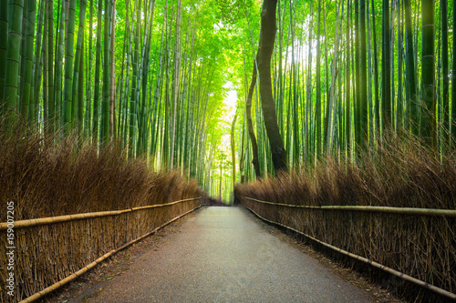 Bambus Fototapete Gunstig Kaufen Fototapeten Bildtapete