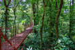 Bridge in Rainforest of Monteverde