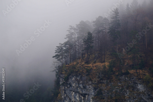 Aluminium Betoverde Bos Mysterious alpine forest covered by mist