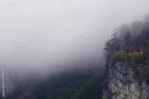 Fotobehang Betoverde Bos Mysterious alpine forest covered by mist