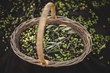 High angle view of olives in wicker basket