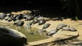 Famiglia di tartarughe