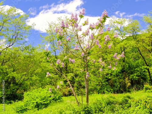 Fotobehang Lime groen 桐の木