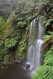 Beauchamp waterfall in lush rainforest