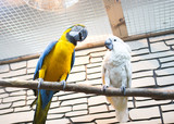 Two parrots sit on a branch in the zoo