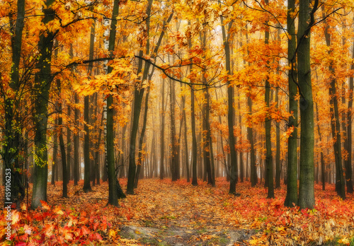Papiers peints Orange eclat autumn forest. foggy morning. A picturesque fog in the autumn forest