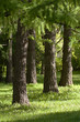 Powerful big trees in a summer sunny park