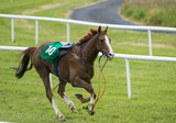 loose runaway horse without a jockey running on the race track