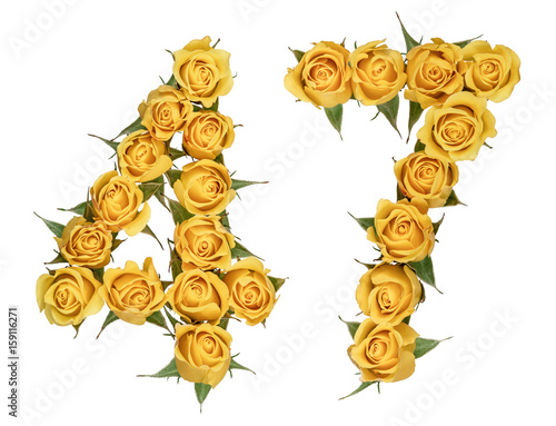 Poster Arabic numeral 47, forty seven, from yellow flowers of rose, isolated on white b