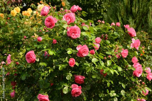Blumen 811