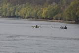 Zwei Angler auf dem Fluss und Schwäne, die darüberfliegen
