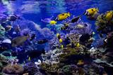 Aquarium reef - 159128886