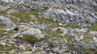 Barren rocky landscape in Newfoundland, Canada