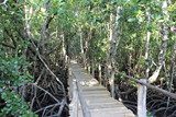 Bridge at Jozani Chwaka Bay National Park / Zanzibar Island, Tanzania, Indian Ocean, East Africa