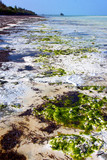 seaweed beach    zanzibar   indian   sand isle  sky  and
