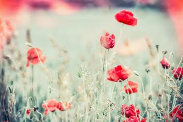 Poppies field, Beautiful nature landscape