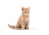 Small kitten posing