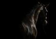 Elegant sport horse - 159176230