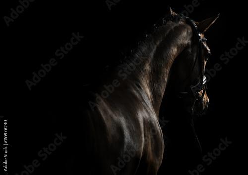 Elegant sport horse Poster