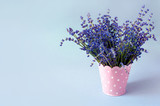 Fresh lavender in blue jug on white table