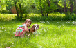 Little girl playing with a dog on the lawn .
