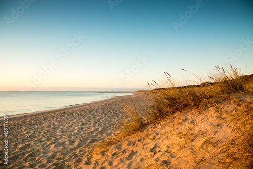 Foto op Canvas Noordzee Dünengras im warmen Morgendlicht II