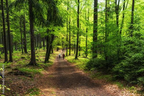 Wandern im Elbsandsteingebirge Poster