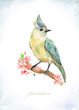 vintage greeting card with a pretty bird on flowering branches. watercolor painting
