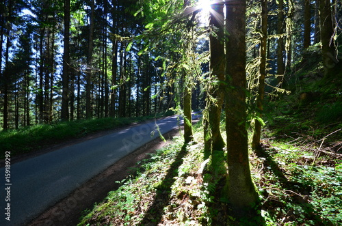 canvas print picture The sun welcomes the Black forest