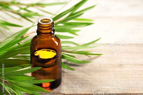 Foto Murales tea tree oil in the amber glass bottle and fresh tea tree leaves