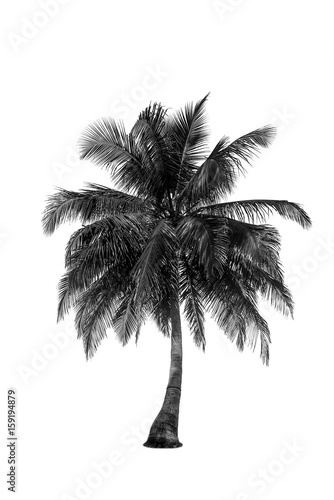 Coconut palm tree silhouette isolated clipping path - 159194879