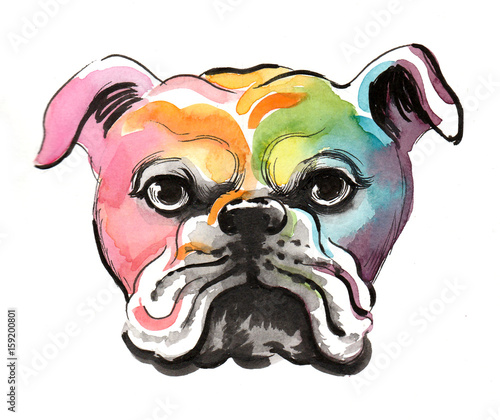 Colorful bulldog - 159200801