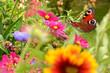 Quadro Schmetterling 353